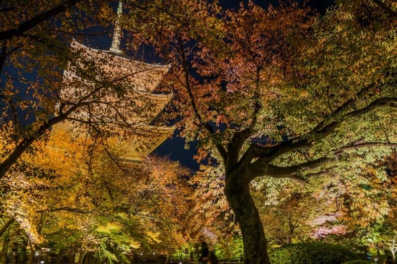 2019京都紅葉~東寺ライトアップ_e0363038_10282729.jpg