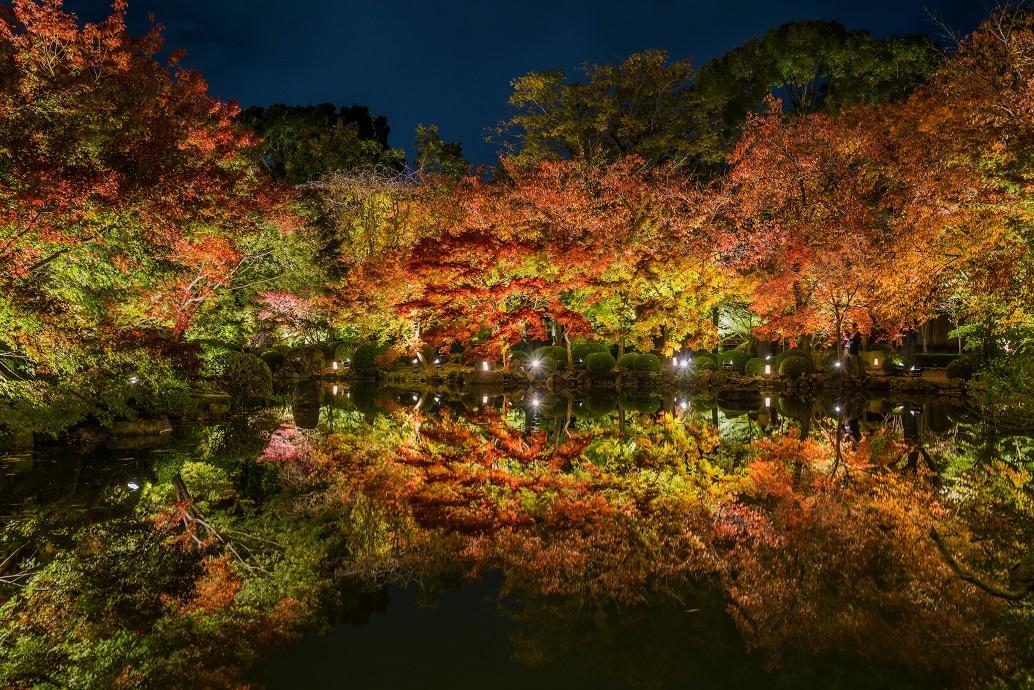 2019京都紅葉~東寺ライトアップ_e0363038_10284273.jpg
