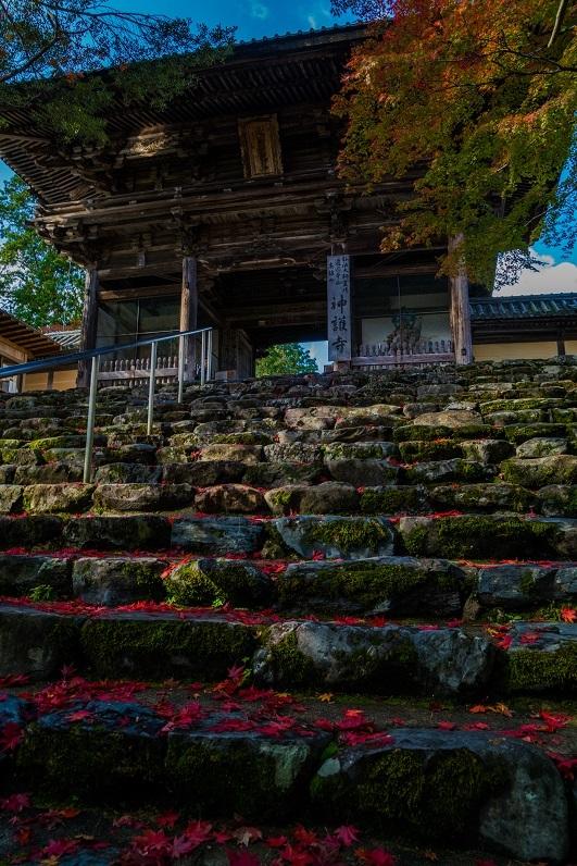 2019京都紅葉~神護寺_e0363038_10463684.jpg