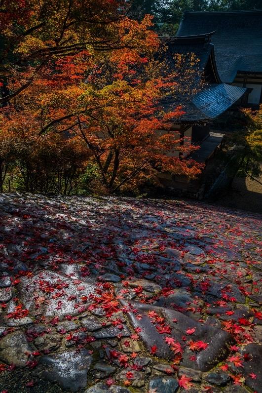 2019京都紅葉~神護寺_e0363038_10465802.jpg