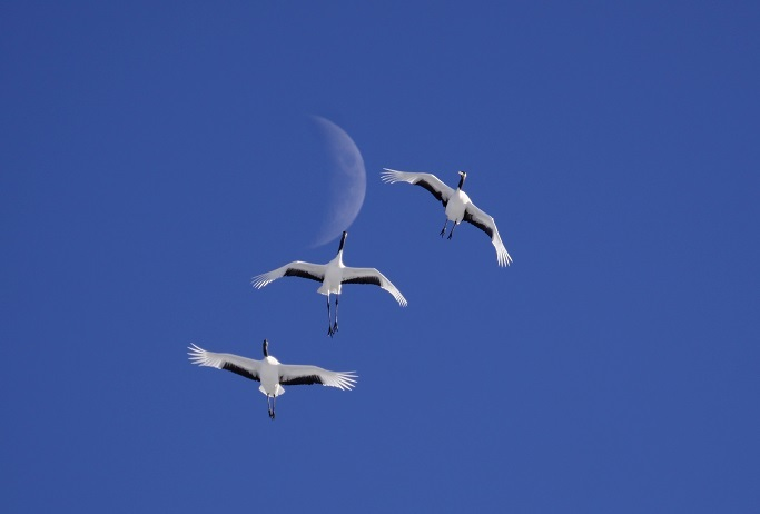 飛んでる写真 11月29日_f0113639_13363496.jpg