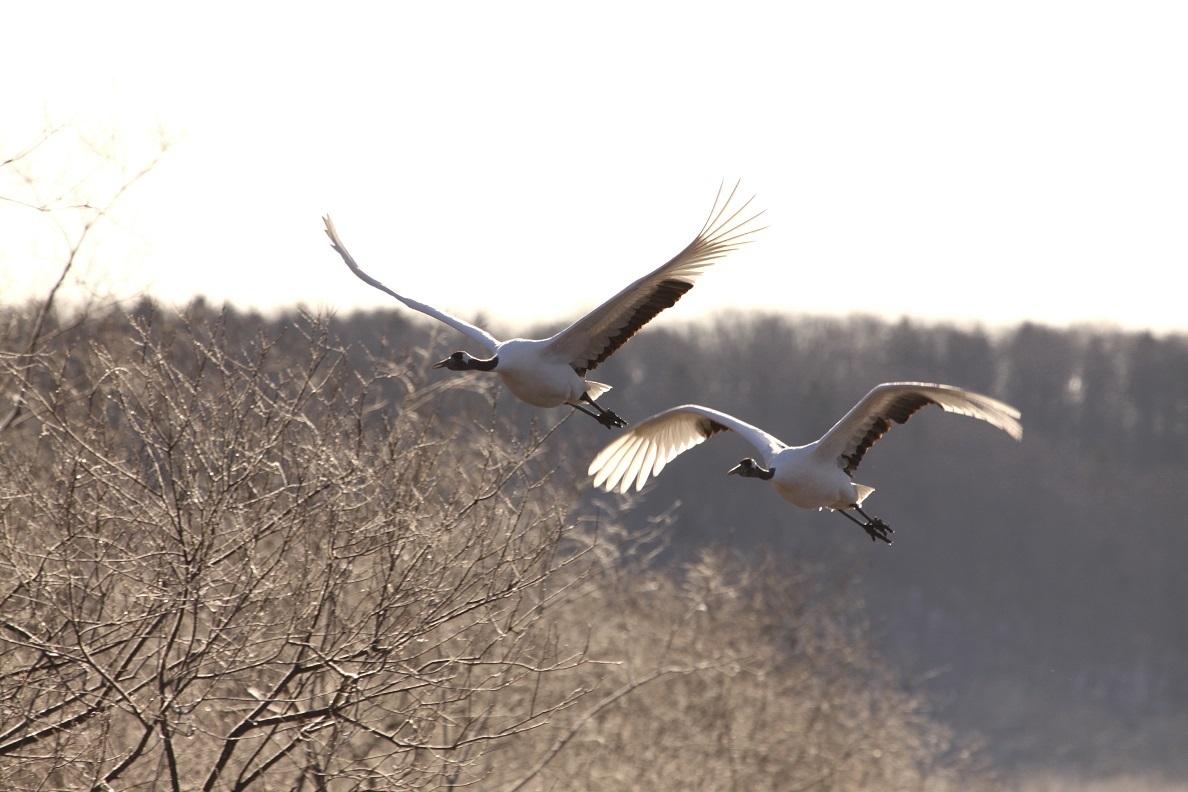 飛んでる写真 11月29日_f0113639_13364016.jpg