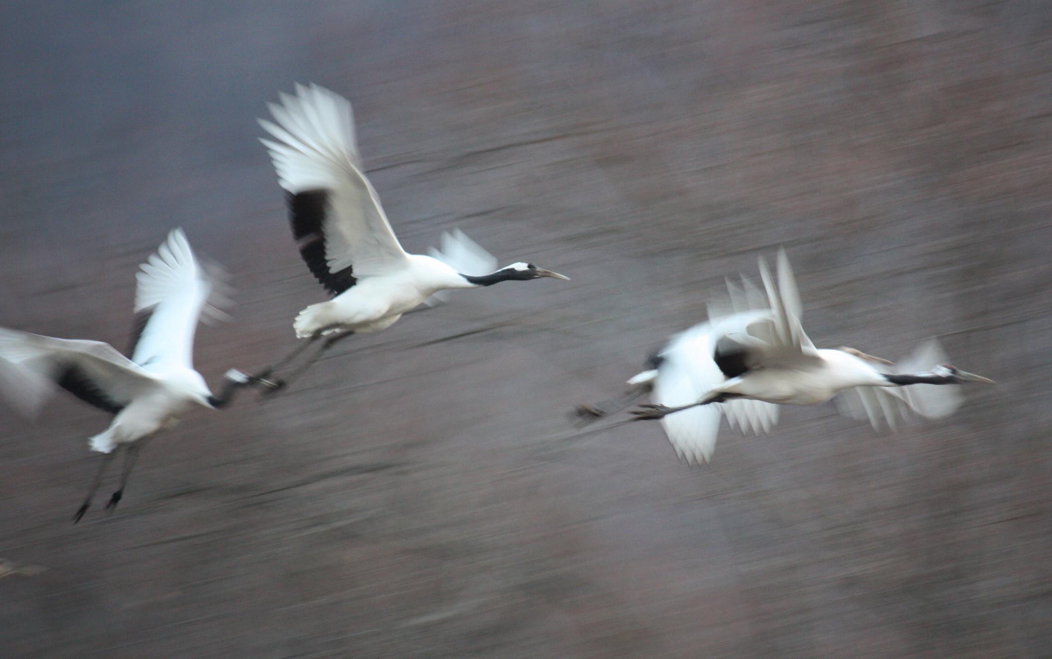 飛んでる写真 11月29日_f0113639_13365545.jpg