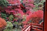 紅葉が見頃ですね~♪_d0118053_16055313.jpg