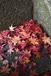 紅葉が見頃ですね~♪_d0118053_16061157.jpg