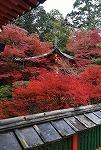 紅葉が見頃ですね~♪_d0118053_16065596.jpg