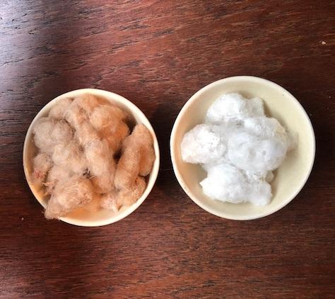 棉を収穫しました_b0087556_23342421.jpg