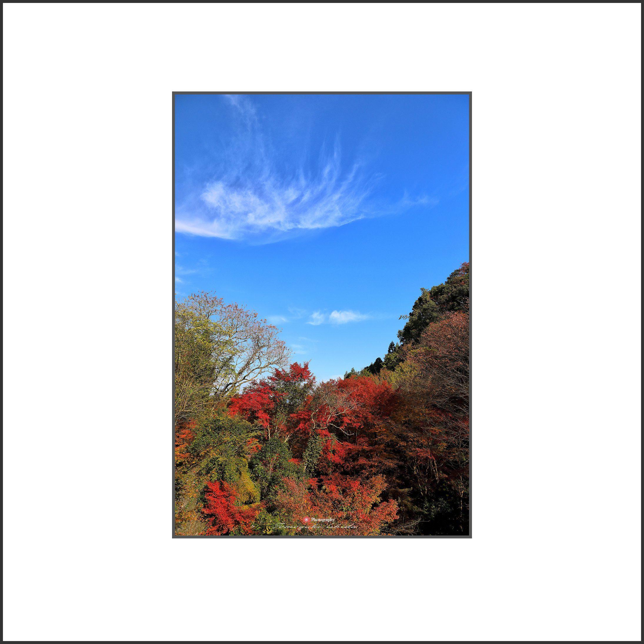 秋晴れ_c0253556_06285660.jpg