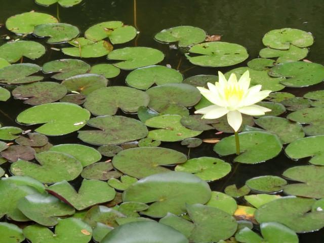 パノム・ルン遺跡というところ_f0189467_16514931.jpg