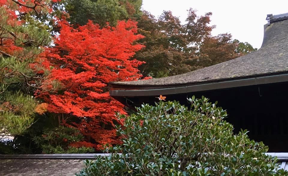京都・大徳寺真珠菴  「宗和忌茶会」へ♪_a0138976_18142696.jpg