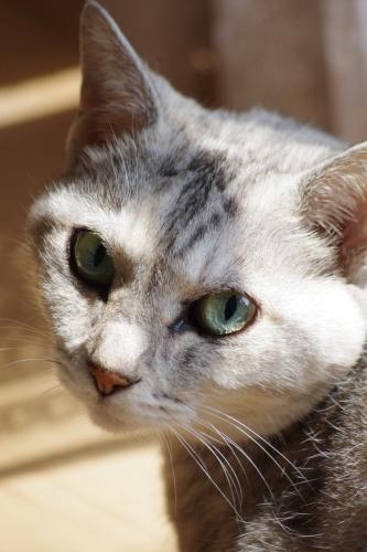 本日正午ごろ、モンちゃんのからだは猫楠舎の土に還ります_f0054677_07401474.jpeg