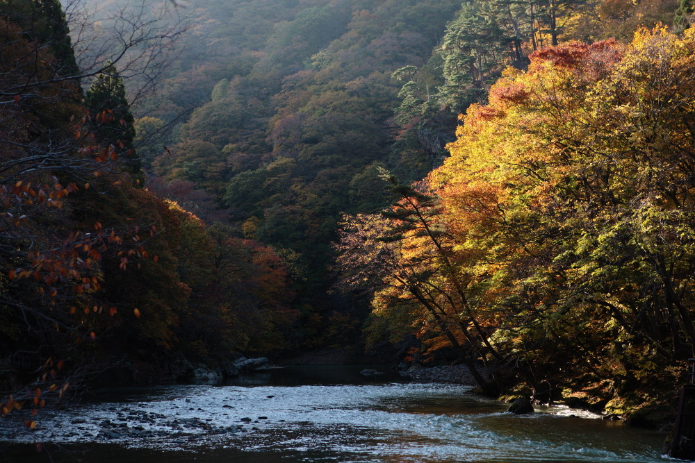 鹿角市 湯瀬渓谷の紅葉に朝日があたる その3_e0165983_09401701.jpg
