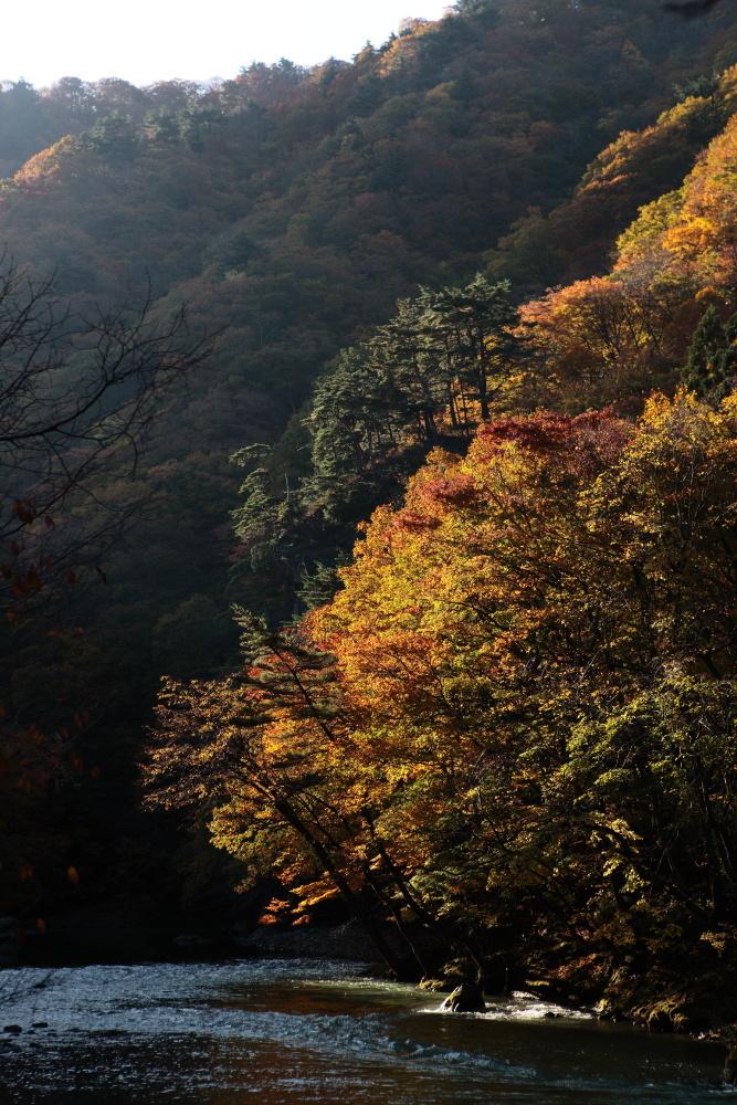 鹿角市 湯瀬渓谷の紅葉に朝日があたる その3_e0165983_09403163.jpg
