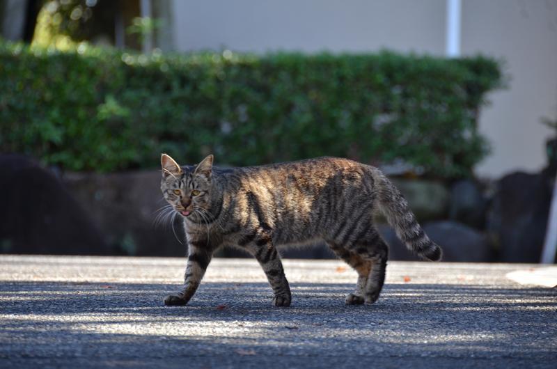 名古屋のネコだでしょうがにゃあがね_f0159784_22290180.jpg