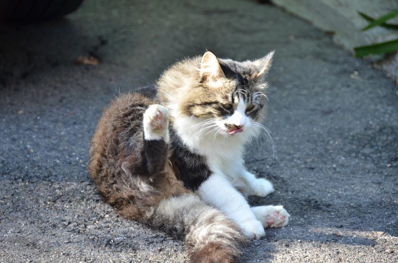 名古屋のネコだでしょうがにゃあがね_f0159784_22291373.jpg