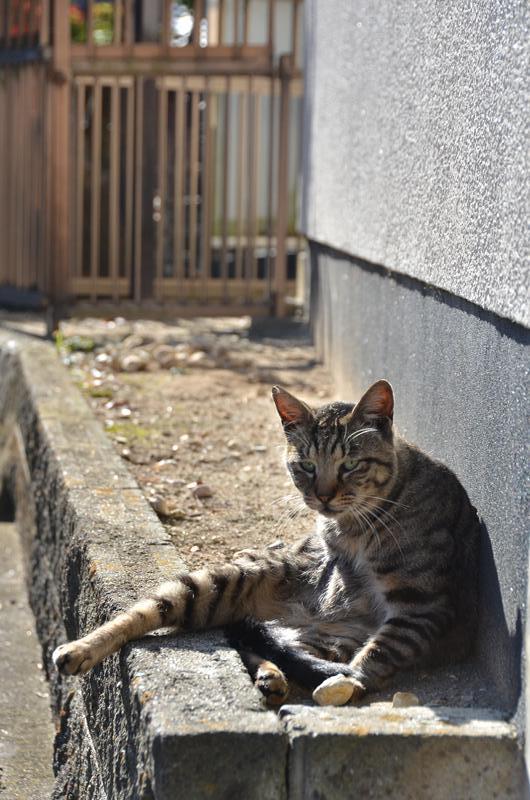 名古屋のネコだでしょうがにゃあがね_f0159784_22291588.jpg