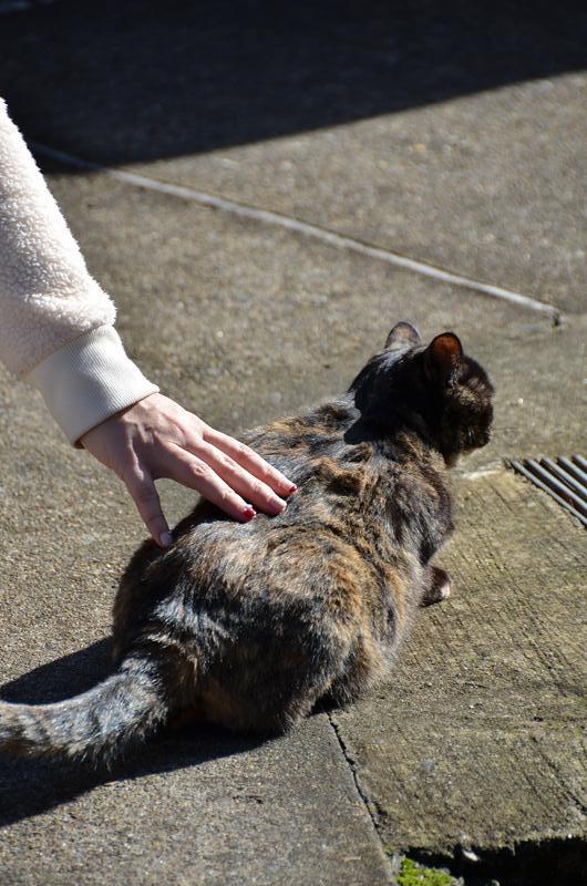 名古屋のネコだでしょうがにゃあがね_f0159784_22292516.jpg