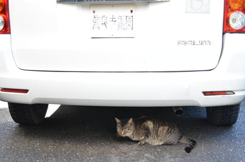 名古屋のネコだでしょうがにゃあがね_f0159784_22293438.jpg