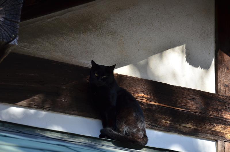 名古屋のネコだでしょうがにゃあがね_f0159784_22293841.jpg