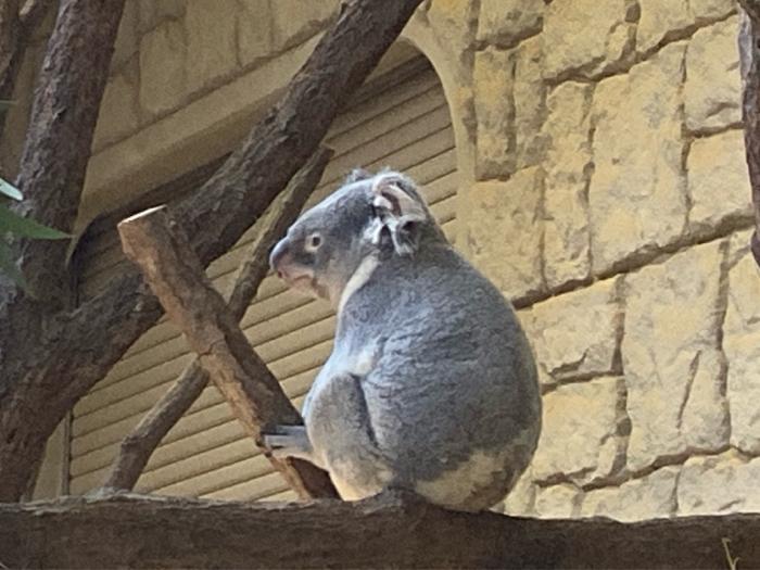 今日は動物園と名古屋城、強行スケジュールで歩きました。_b0175688_19552659.jpg