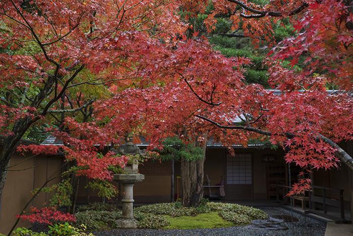 鎌倉・一条恵観山荘の紅葉①_b0145398_23344076.jpg