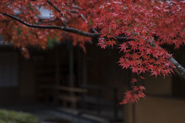 鎌倉・一条恵観山荘の紅葉①_b0145398_23351987.jpg