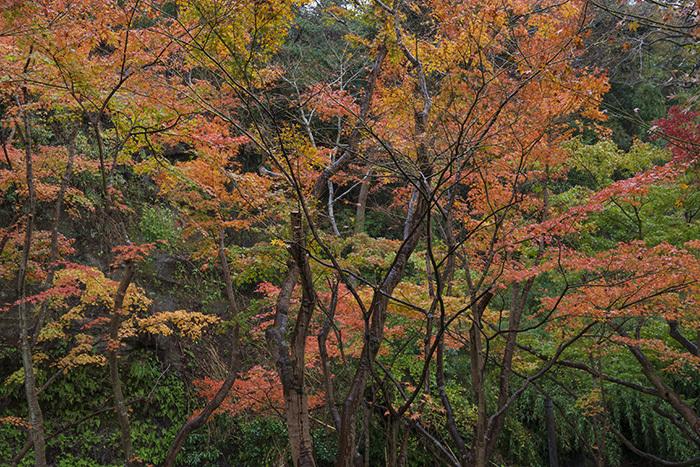 鎌倉・一条恵観山荘の紅葉①_b0145398_23353677.jpg