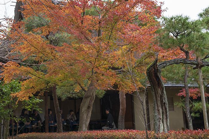鎌倉・一条恵観山荘の紅葉①_b0145398_23355671.jpg