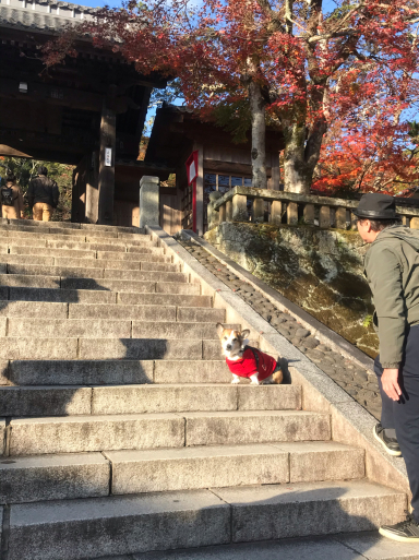 修禅寺でお散歩_f0101201_18050300.jpg