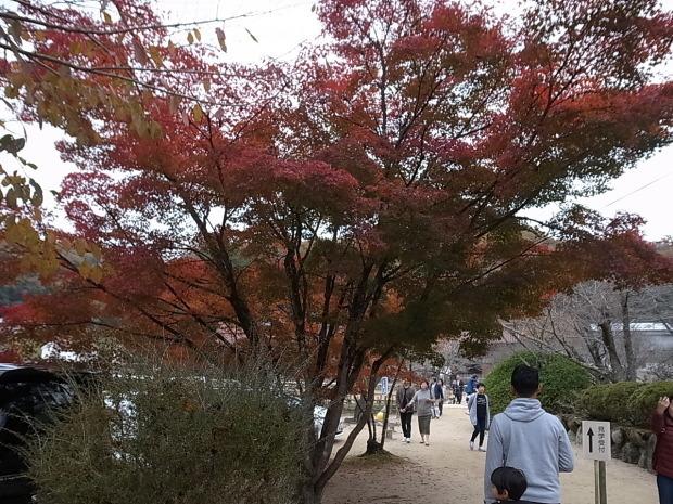 特別史跡旧閑谷学校の紅葉~熊山遺跡_f0197703_11514501.jpg