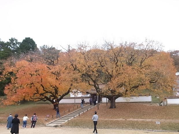 特別史跡旧閑谷学校の紅葉~熊山遺跡_f0197703_11551196.jpg