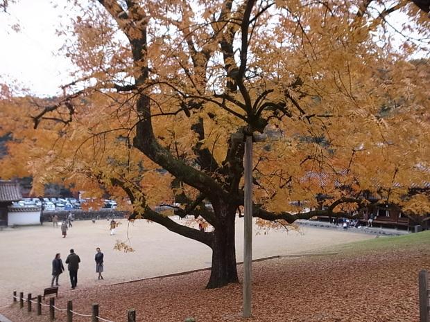 特別史跡旧閑谷学校の紅葉~熊山遺跡_f0197703_11562736.jpg