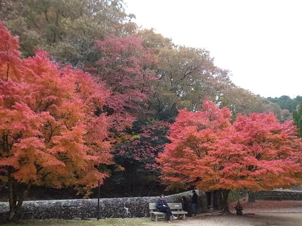 特別史跡旧閑谷学校の紅葉~熊山遺跡_f0197703_12140121.jpg