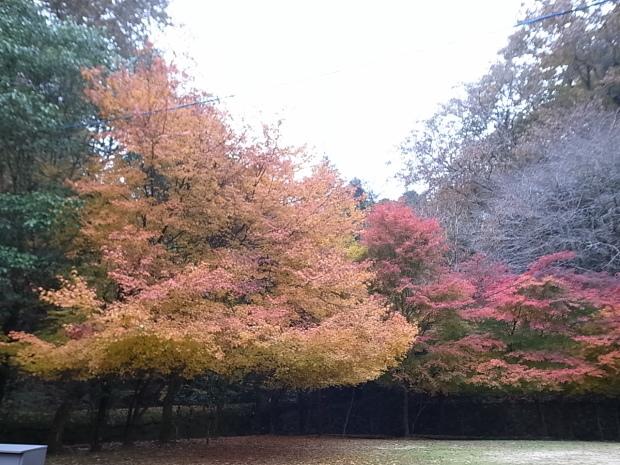 特別史跡旧閑谷学校の紅葉~熊山遺跡_f0197703_12154538.jpg
