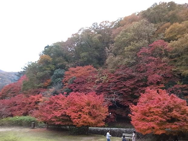 特別史跡旧閑谷学校の紅葉~熊山遺跡_f0197703_12173670.jpg