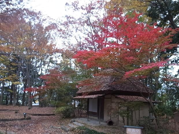 特別史跡旧閑谷学校の紅葉~熊山遺跡_f0197703_12330568.jpg