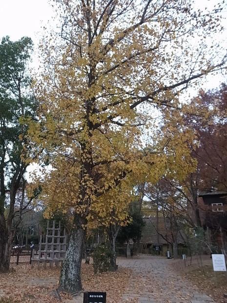 特別史跡旧閑谷学校の紅葉~熊山遺跡_f0197703_12334602.jpg