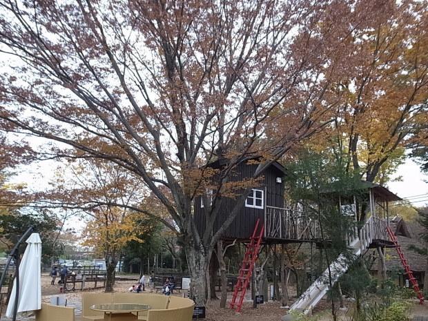 特別史跡旧閑谷学校の紅葉~熊山遺跡_f0197703_12345298.jpg