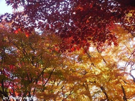 暖かな光の日_c0098807_23494551.jpg