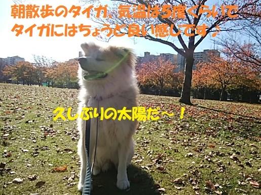 f0121712_00451292.jpg