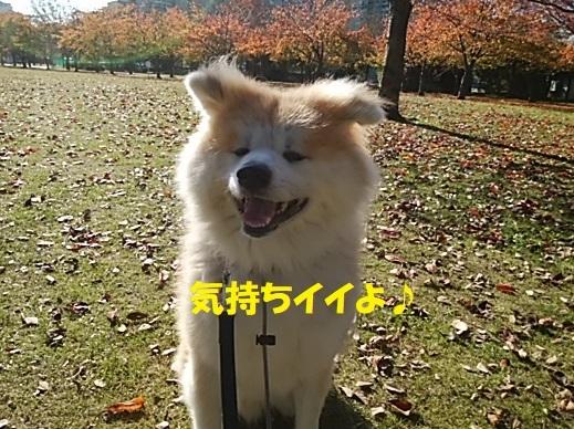 f0121712_00451749.jpg