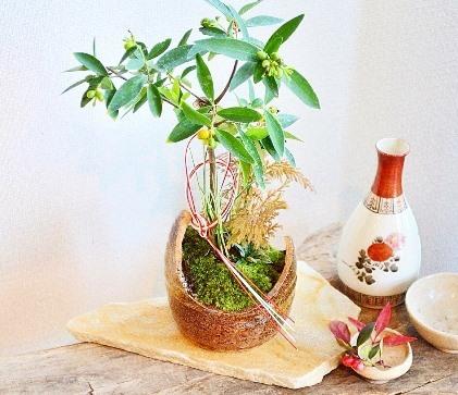 12月 植物ワークショップご案内_d0263815_14223566.jpg