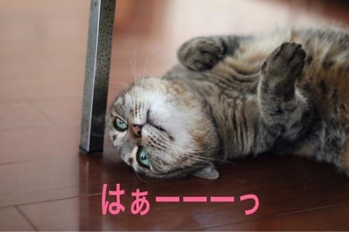にゃんこ劇場「床暖房始めました!」_c0366722_21110812.jpeg