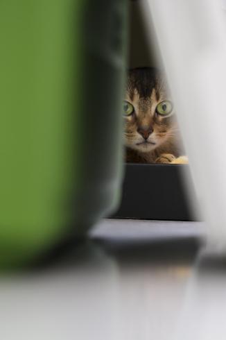 [猫的]視線_e0090124_23042136.jpg