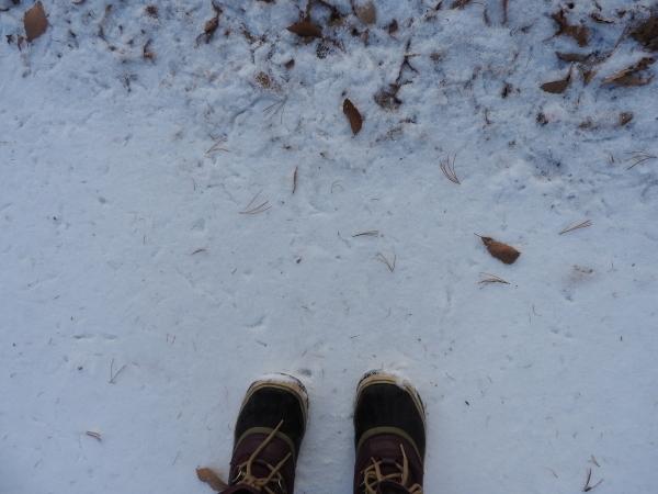 積雪5ミリ:路面凍結注意!(2019年11月30日)_b0174425_07515290.jpg