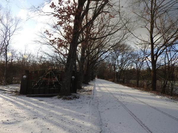 積雪5ミリ:路面凍結注意!(2019年11月30日)_b0174425_07535007.jpg