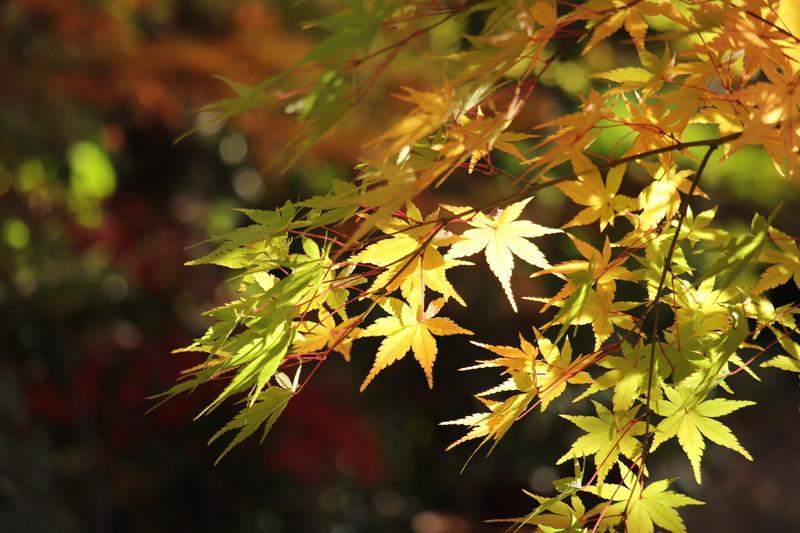 彩り綺麗な伊興・薬師寺境内。。_a0214329_16503640.jpg