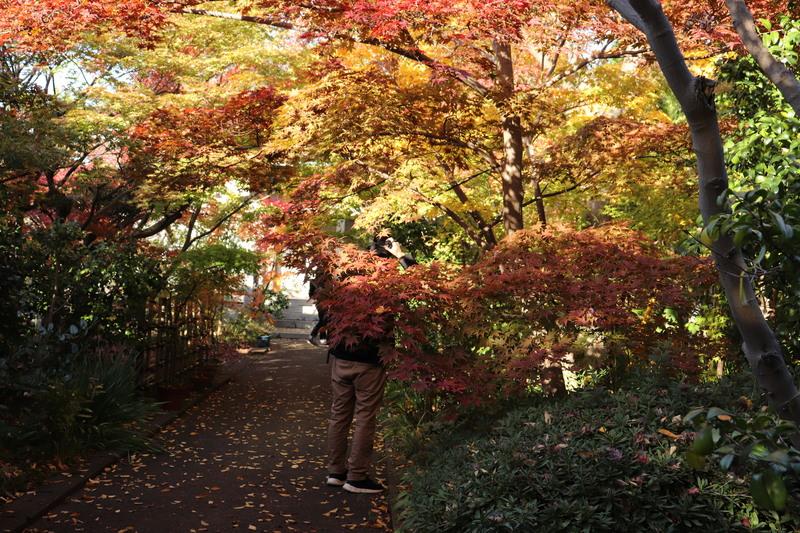 彩り綺麗な伊興・薬師寺境内。。_a0214329_16553726.jpg