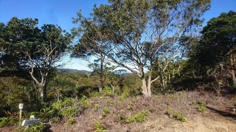 海への眺望を目指して〜尾根の間伐と魅力的な森整備〜_c0239329_18050228.jpg