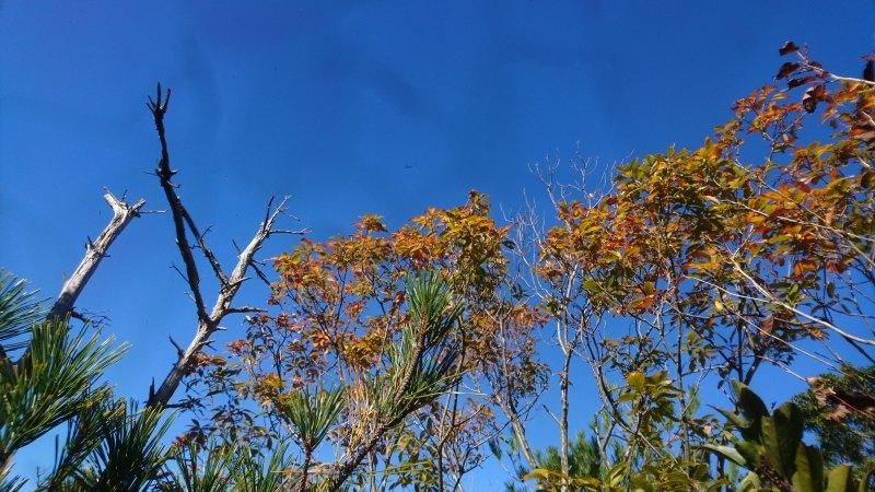 海への眺望を目指して〜尾根の間伐と魅力的な森整備〜_c0239329_18050487.jpg